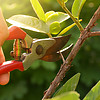A Complete Guide to Pruning Plants
