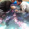 Recent Baptism ceremony