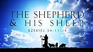 The Shepherd and His Sheep