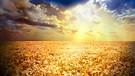 Quinton - Promise of Heaven