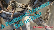 A Feathered-Dinosaur Tail or Tale?