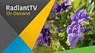 RadiantTV Episode 170705