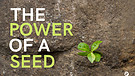 The Power Of A Seed - Part 4