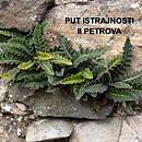 II Petrova - Istrajnost